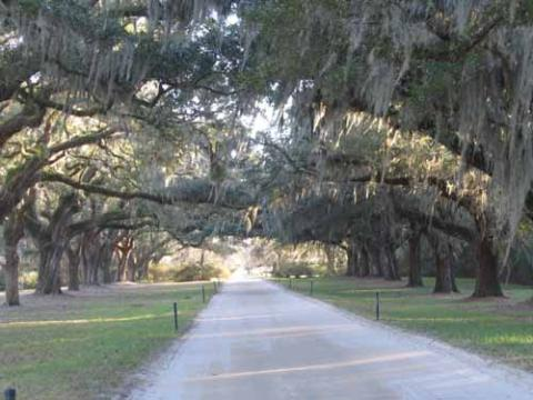 A View of Boone Hall Plantation