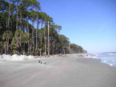 View of the beach off Hunting Island