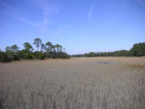 View of the marshes off Hunting Island