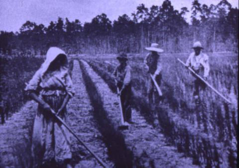 Gullahs laboring in a rice plantation (19th century)